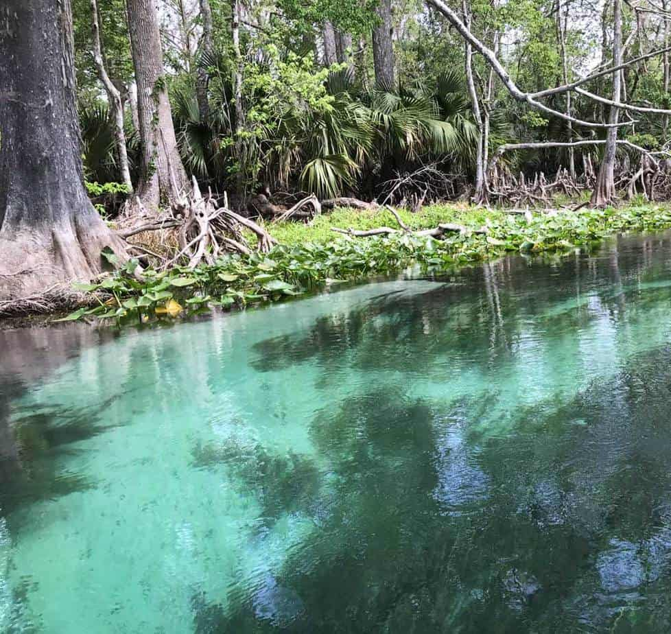 Silver Springs Silvers: Kayaking Silver Springs: Exquisite Paddling Trail Is