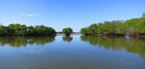 Solitude in 10,000 Islands National Wildlife Refuge.