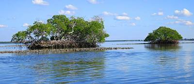 Mangrove islands at 10,000 Islands National Wildlife Refuge.