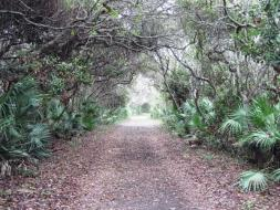 Nature Trail at Gamble Rogers State Recreation Area.