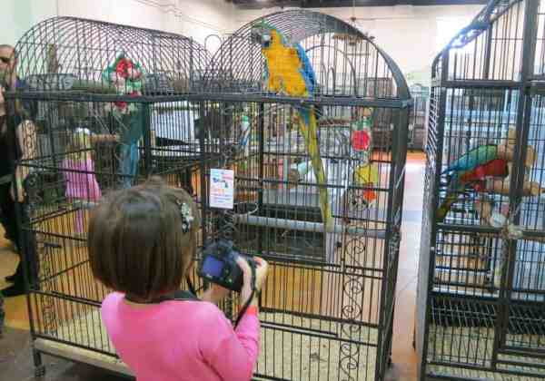 The Aviary at Cauley Square in the Redland.