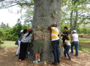 The baobab tree at Fruit and Spice Park is hollow inside so visitors are urged to see what they can hear.