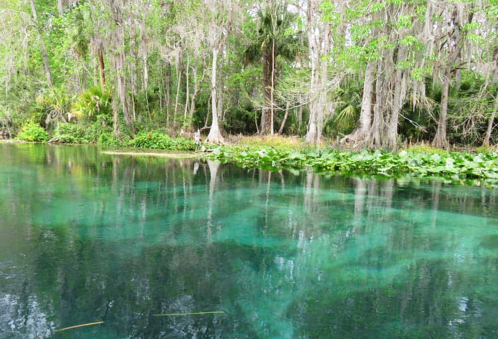 Genial Clear Turquoise Water Along Silver River. (Photo: Bonnie Gross)