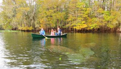 Admirers of manatees float among them at Manatee Springs State Park on the Suwanee River.