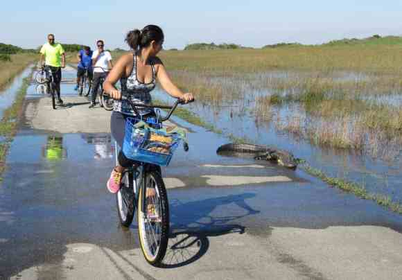 Bicyclists ride through water at The Shark Valley section of Everglades National Park. (Photo: Bonnie Gross)