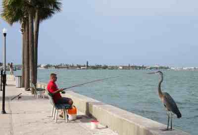 On the Intracoastal channel side of Pass A Grille, you'll find fishermen and their fans.