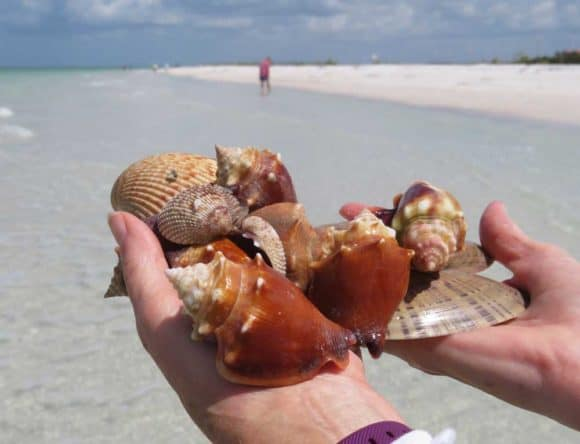 Tigertail Beach is a great place for collecting seashells. I picked up this handful of shells in five minutes. (Photo: David Blasco)