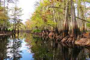 Downstream from the outpost, Fisheating Creek is spectactularly beautiful. (Photo: Bonnie Gross)