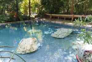 The pool at the Kampong in Coconut Grove.