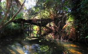 Bedman Creek, a tributary of the Caloosahatchee River near Alva.