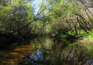 The section near Little Manatee River State Park, the ideal place to paddle, is shallow, with lightly tannic water, a white sandy bottom and rather steep banks.