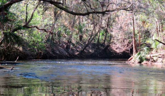 See the little riffle in the water? That's one of the shoals that make the water of the Alafia River rush a bit. (Photo: Bonnie Gross)
