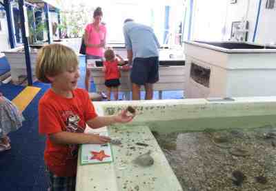 Animal lovers and families might want to stop in the little Gulf Specimen Marine Laboratory in Panacea. It's a non-profit aquarium with lots of touch tanks. (Photo: Bonnie Gross)