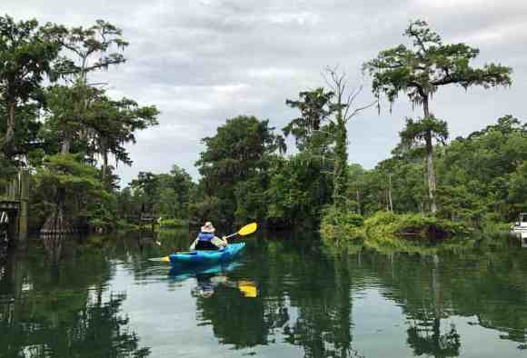 The Wakulla River offers gorgeous scenery, with ancient cypress trees lining the banks. (Photo: Bonnie Gross)