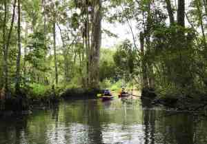 Kayaking on Wakulla River below the famous springs. (Photo: Bonnie Gross)