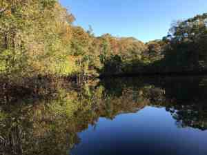 Fall comes in color along the Withlacoochee, thanks to changing leaves on cypress trees. (Photo: Bonnie Gross)