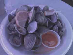 Cedar Key Clams