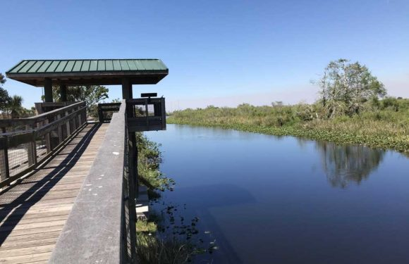 The Broward rest stop at MM 35 connects to several boat ramps and this tower, which provided good wildlife viewing. (Photo: Bonnie Gross)