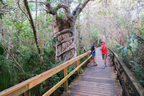 The Big Cypress Bend Boadwalk off the Tamiami Trail.. (Photo: David Blasco)