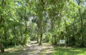 Trail to primitive campsites at Alderman's Ford Park.