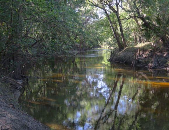 Alafia River at Alderman's Ford Park.