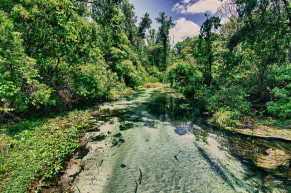 Rock Springs Run/Kelly Park, Apopka (Photo via Flickr Rain0975)