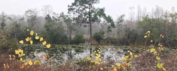 Outdoor adventures near Orlando theme parks: See the real Florida when visiting Disney
