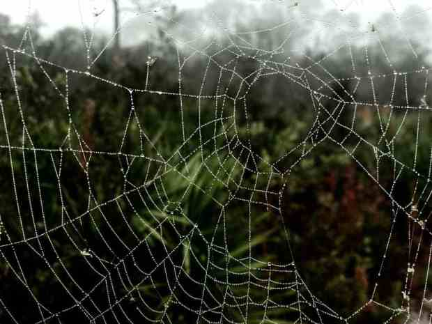Morning dew on a web at Lake Louisa State Park in Clermont. (Photo: Bonnie Gross)