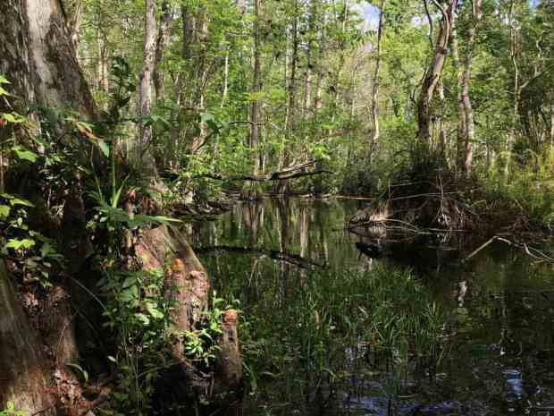 Along the shore of Blue Cypress Lake, we found the entrance to Blue Cypress River. (Photo: Bonnie Gross