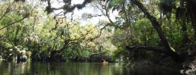 The Hillsborough River