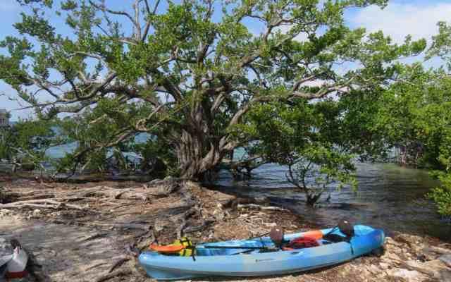 Indian Key Historic State Park is a historic island off Islamorada. (Photo: David Blasco)