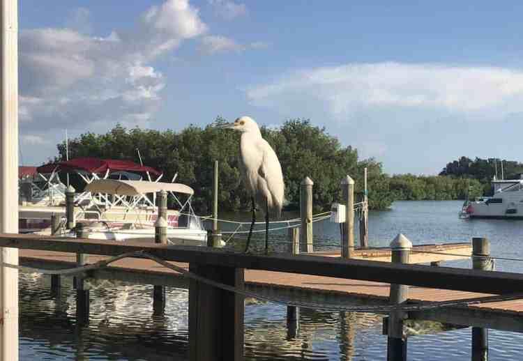 White egret on railing