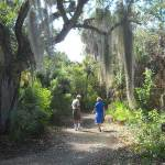 Trail on Cayo Costa island
