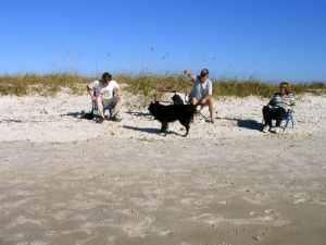 Dog beach at Smyrna Dunes Park