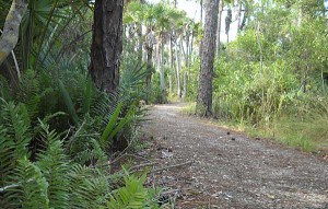 Trail at Sunset at Grassy Waters Preserve in West Palm Beach