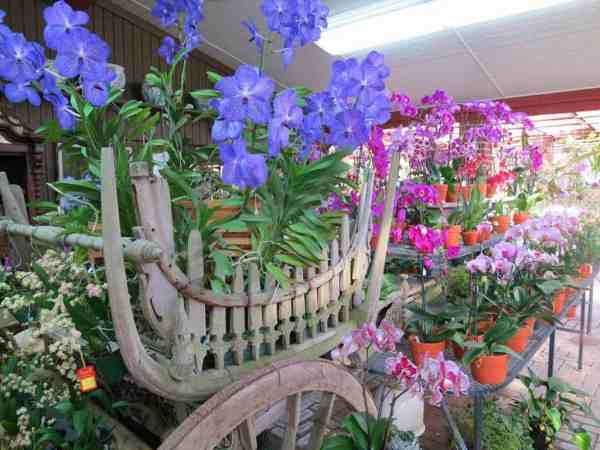 Displays are over the top at R.F. Orchids in the Redland.