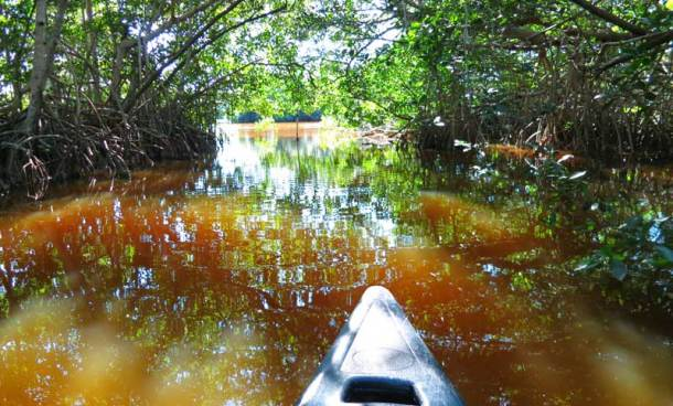 Mangrove tunnel that connects Coot Bay to Mud Lake is among best scenery on this kayak or canoe paddle in Everglades National Park.