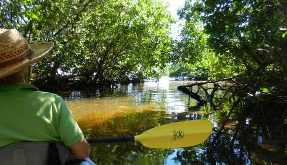 captiva-mangroves