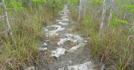 Florida Trail at Loop Road in Big Cypress