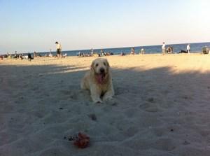 Hollywood Dog Beach
