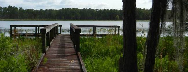 Off a dirt road in the Arbuckle Tract Lake at Wales Ridge State Foresti s pretty  little Lake Godwin.