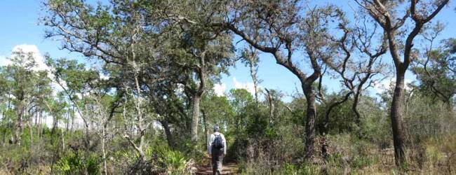 Trail along Tiger Creek Preserve