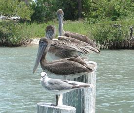 Hutchinson Island Wildlife