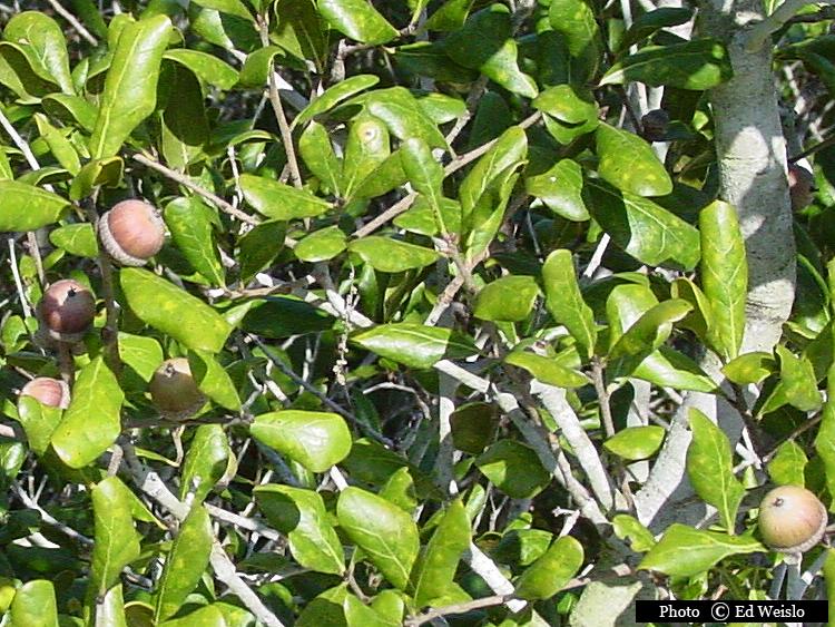Florida Tree Identification
