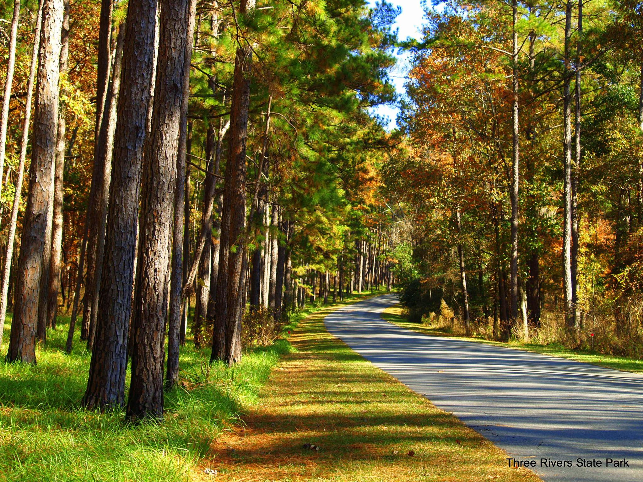 Central Park In Fall Wallpaper Three Rivers State Park Florida State Parks