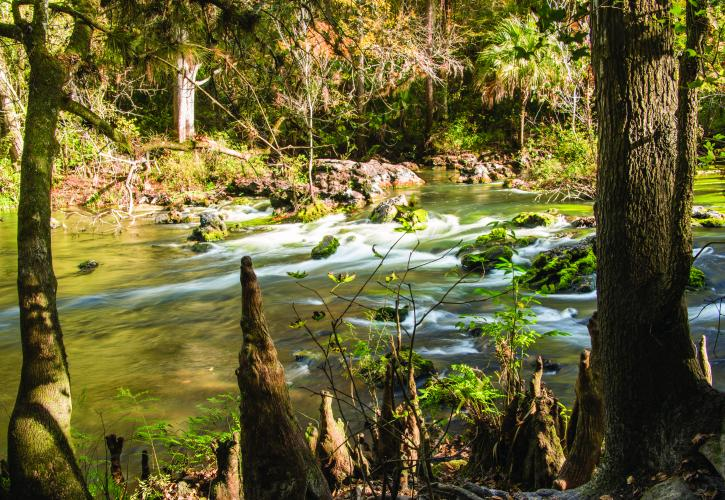 Hillsborough River State Park  Florida State Parks