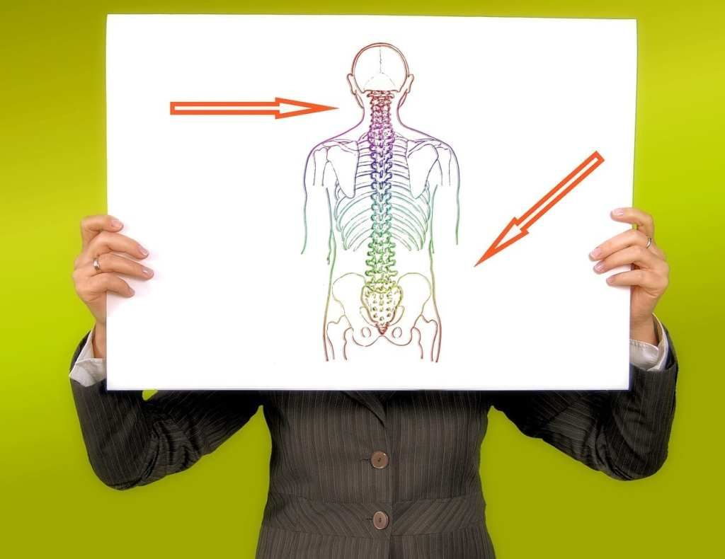 Image shows where slipped discs can occur along the spine