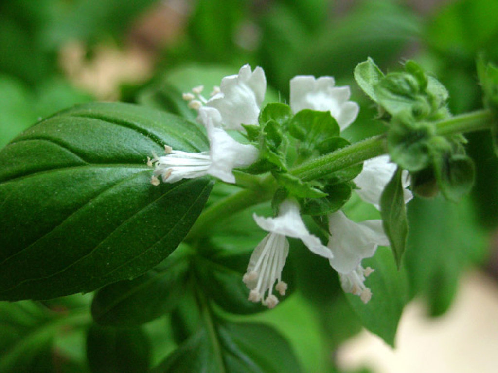 Tabla de sabores de flores comestibles  flors  GO