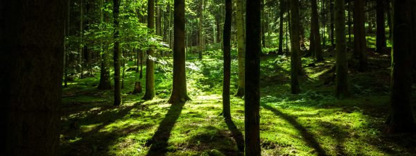 forest light by Schub@
