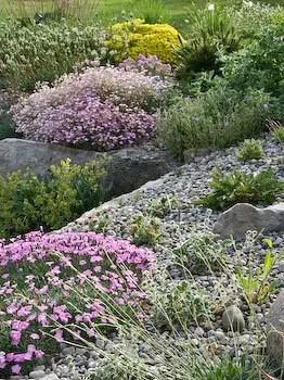 98 Best Images About Alpine Gardens On Pinterest Gardens